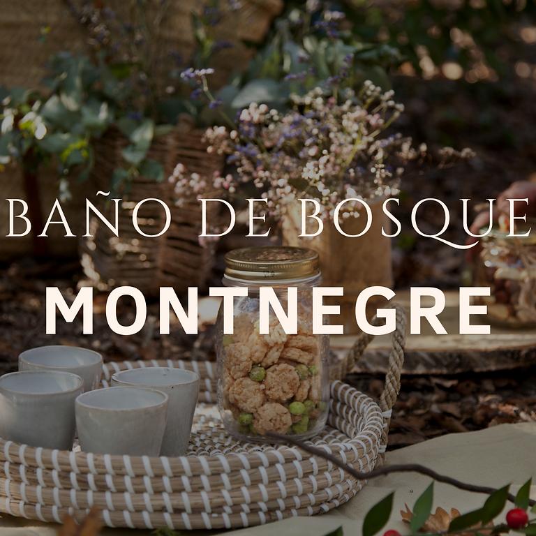 Baño de Bosque Montnegre (grupo privado)