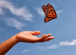 butterfly-release-from-hand-2-e149859596