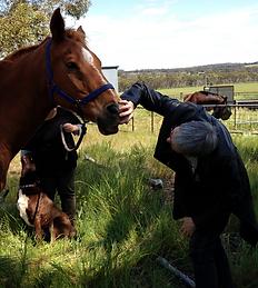 Animal Healing 2.png