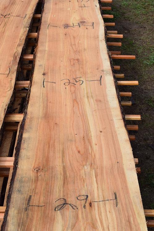 092319-8 Spruce