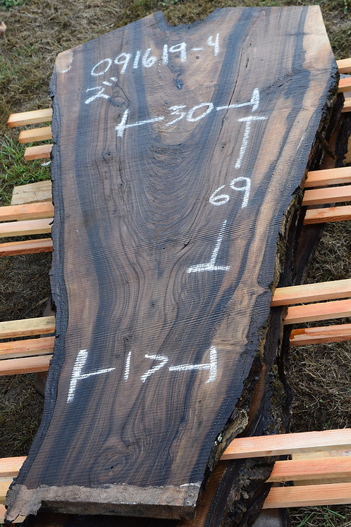 091619-4 English Walnut