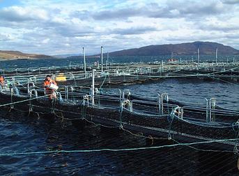 fish farm.png
