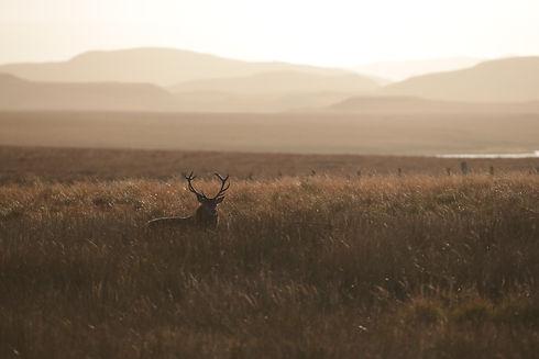deer landscape.JPG