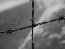 XaaliOReillyPhotos - 36