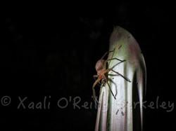XaaliOReillyPhotos - 49
