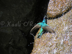 XaaliOReillyPhotos - 29