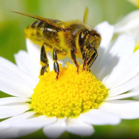 Bienen im Gebäude