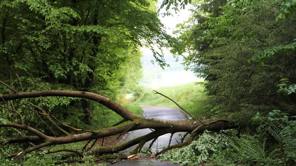 Baum auf Strasse gestürzt