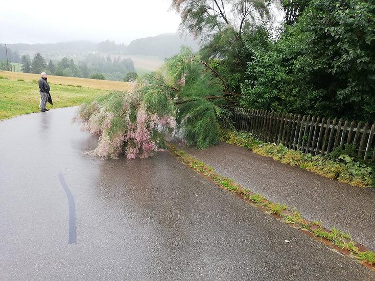 Baum auf Strasse