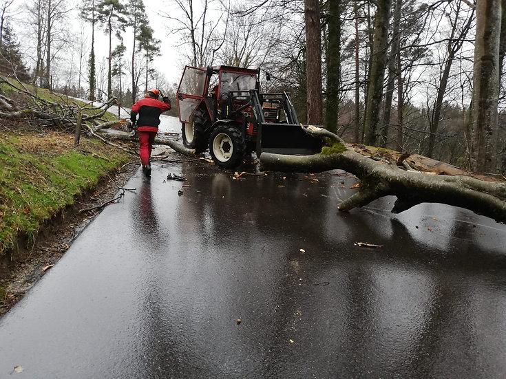 Sturm Sabine diverse Bäume auf Strasse