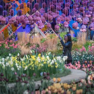 Holland: Flowering the World