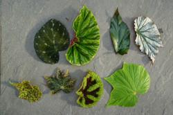 Begonia Photoshoot