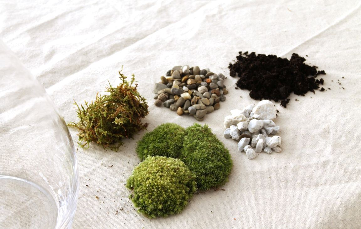 Terrarium Ingredients