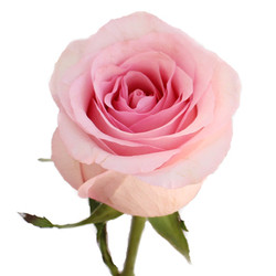 Nena Rose
