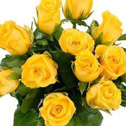 Millenium Yellow Rose