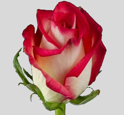 High & Mya Rose
