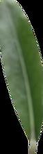 Zagarella_Oliveno%CC%88l_Blatt_1_edited.