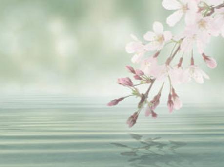 Fleur d'eau