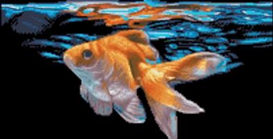 A Vibrant Goldfish