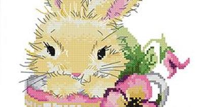 Joy Sunday: Rabbit in the cup