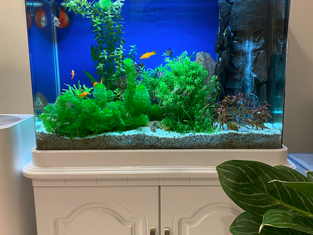 Fish aquarium for sale Ho Chi Minh City, Vietnam