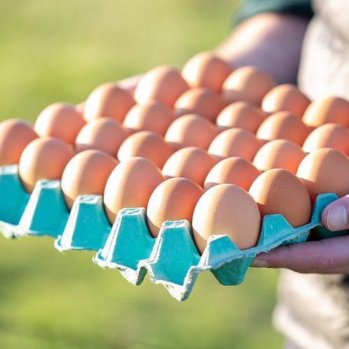 Gum'n Way Free Range Eggs  - Size 7 +