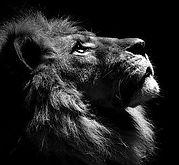 LION 1_edited_edited.jpg