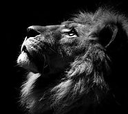 LION 2_edited.jpg