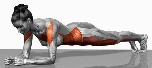 Planking core muscles