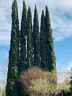 Cyprus Sac.jpg