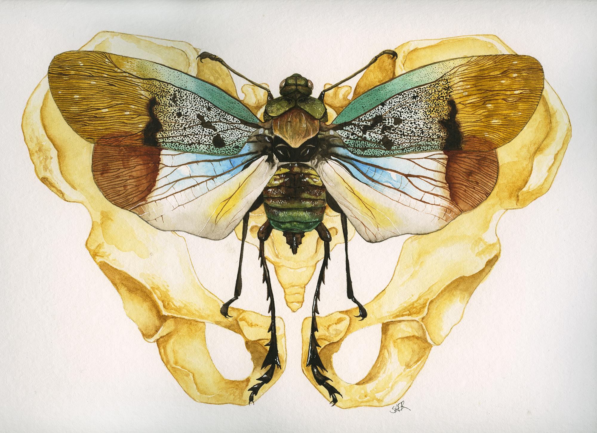 Cicada and Pelvis
