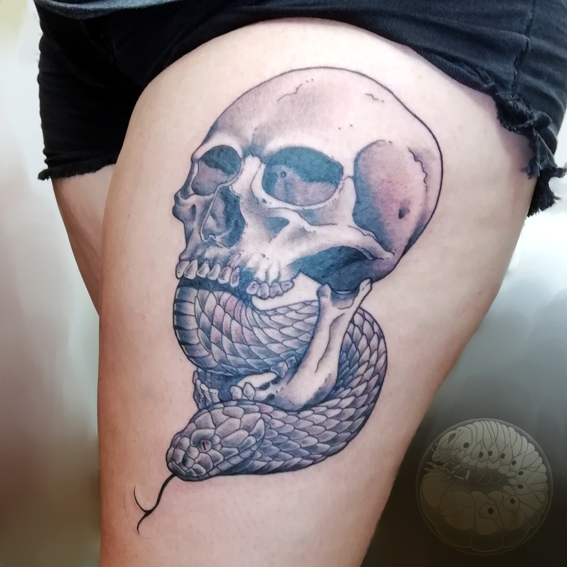 skullsnek