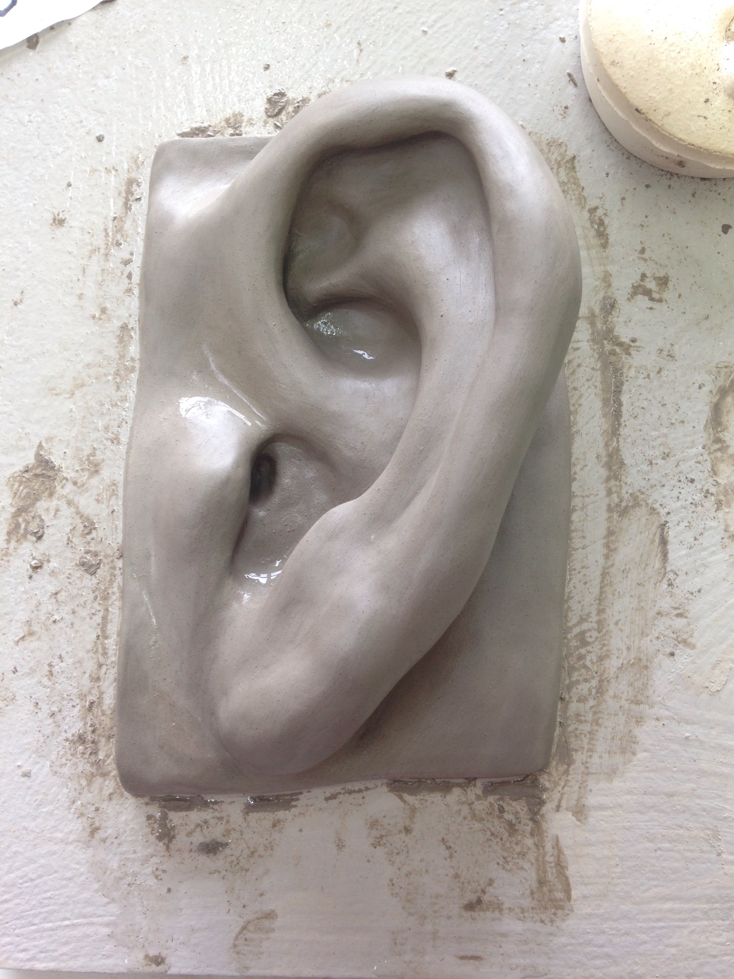 Scaled Up Ear