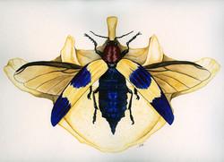 Chrysochroa and Vertebra