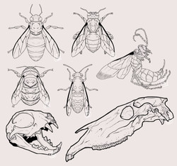 Insects and Bones