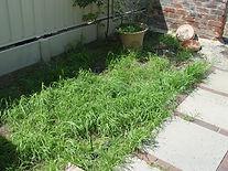 Killing grass