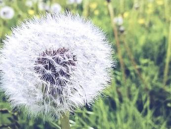 Tenterden Mindfulness Group - A Short History