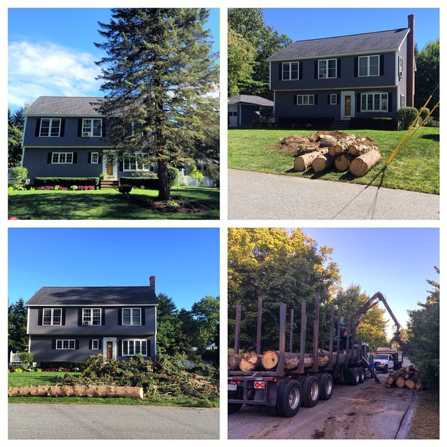 All in a day's work! #salemnh #treelinenh #treework #treeremoval #treeclimb #chopanddrop