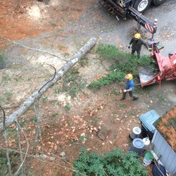 More crane work in Danville, NH. 10 white pines around the property