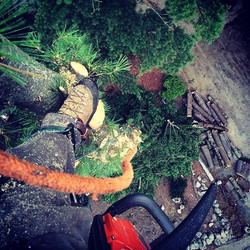 A day in the life of _treelinenh  #treelinenh #treeclimber #treeremoval #southernnh #derrynh #sandow