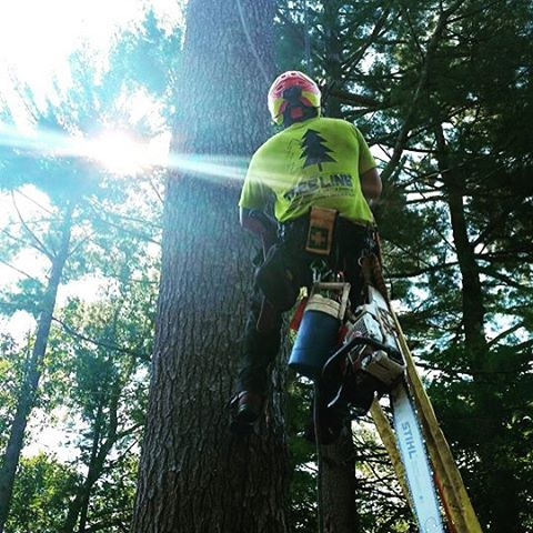 Great shot of Tree Line hard at work from a happy customer! #TreeLineNH #SouthernNH #NewHampshire #T