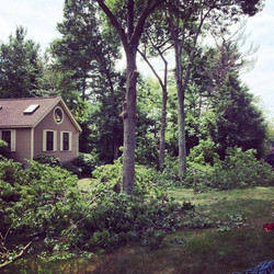 This tree had to drop some serious limbs for the summer #treelinenh #derrynh #southernnh #treework #
