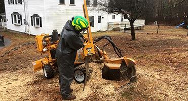 New Hampshire Tree Service