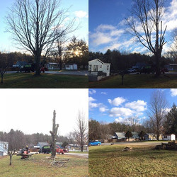 Did a 49 year old dying maple today. Met the guy who planted the tree lol. Was a solid 2.5' at the b