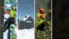 Background_web_TreeLine_Dec19.jpg