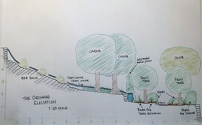 The orchard Elevation.JPG