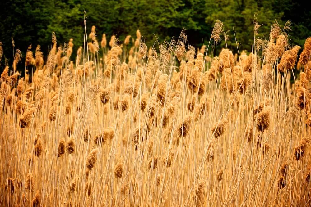 organic-agriculture-Montelovesco