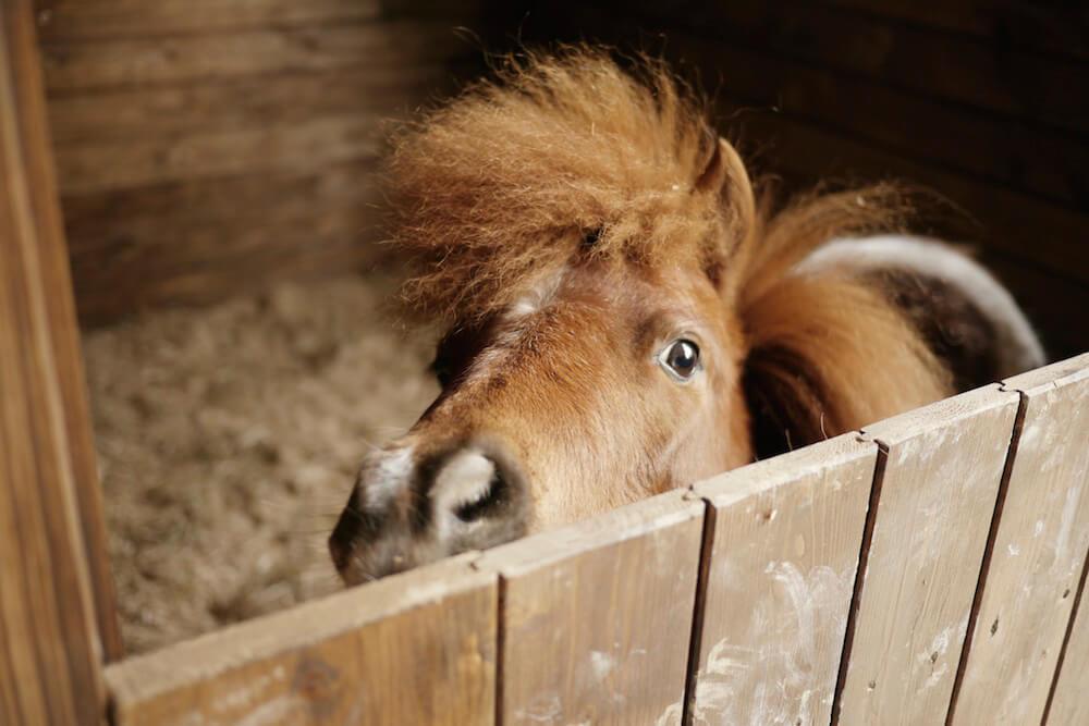 horses-welcome-Agrit.-Montelovesco