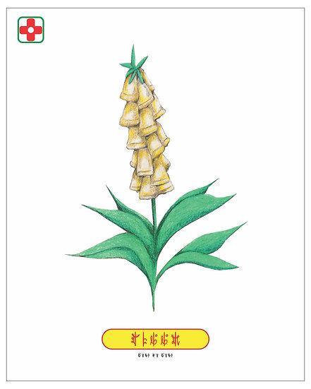 Corn Bells