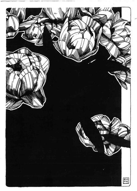 Rose A Beggining